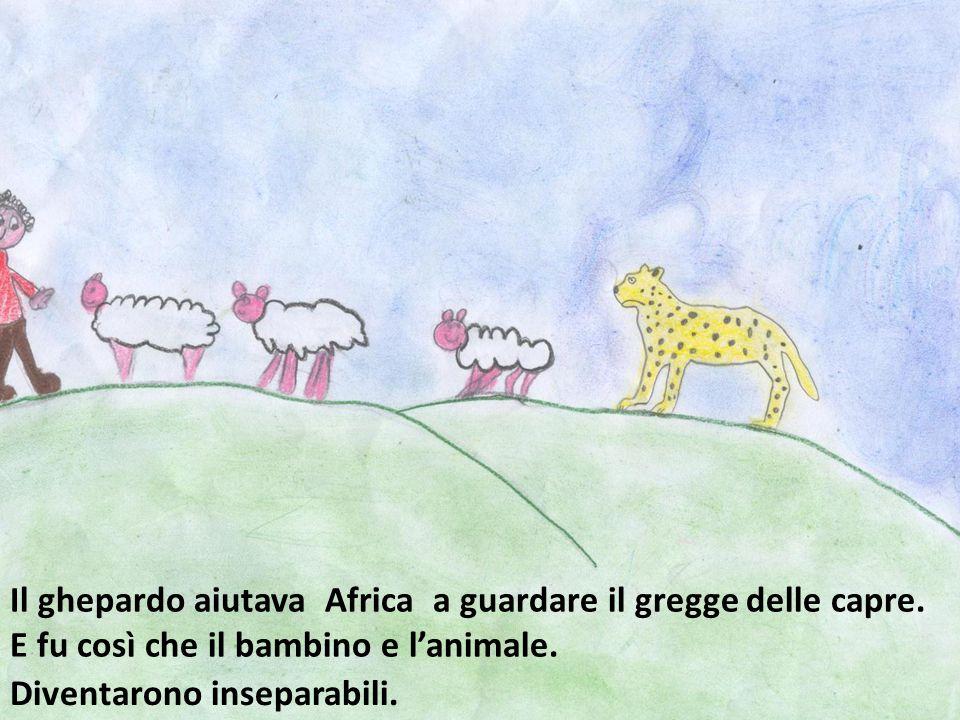 Il ghepardo aiutava Africa a guardare il gregge delle capre.