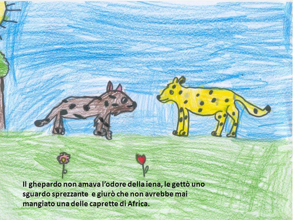 Il ghepardo non amava l'odore della iena, le gettò uno sguardo sprezzante e giurò che non avrebbe mai mangiato una delle caprette di Africa.