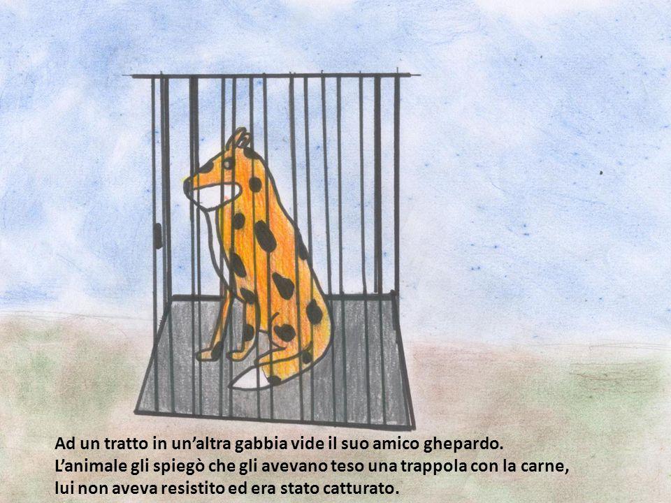 Ad un tratto in un'altra gabbia vide il suo amico ghepardo.