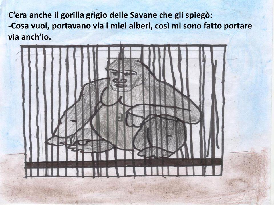 C'era anche il gorilla grigio delle Savane che gli spiegò: