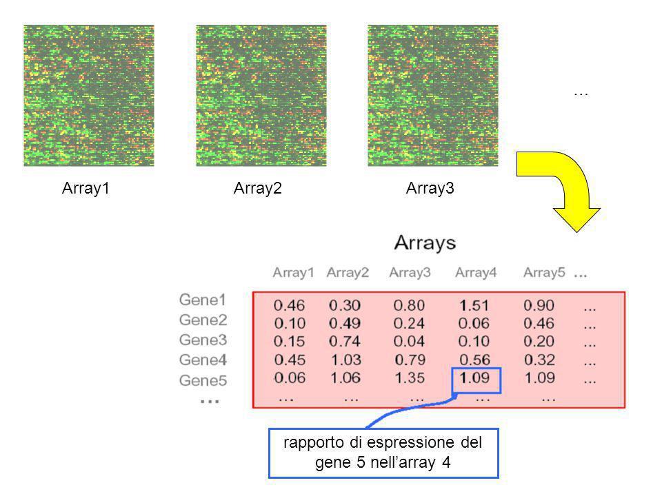rapporto di espressione del gene 5 nell'array 4