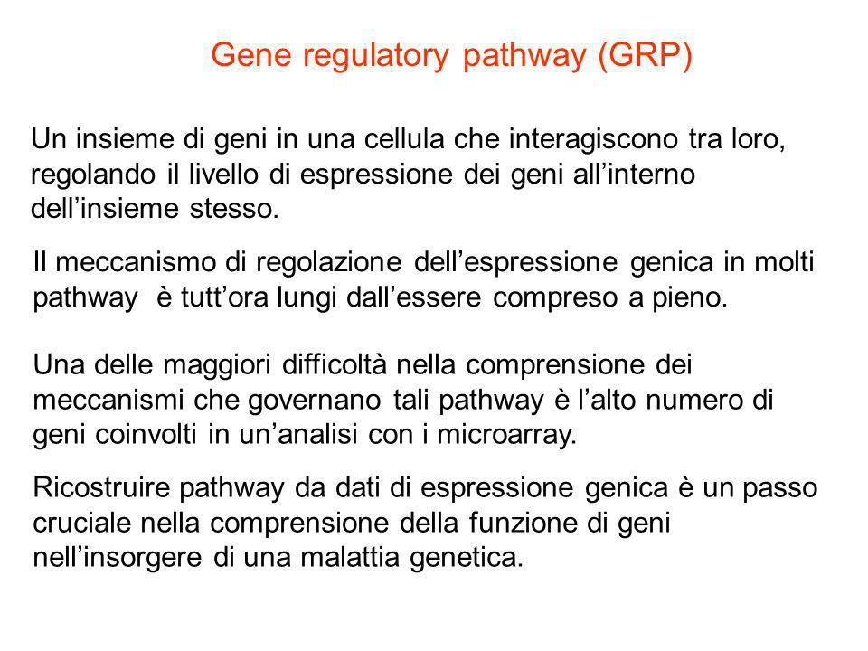 Gene regulatory pathway (GRP)