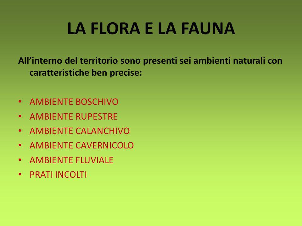 LA FLORA E LA FAUNA All'interno del territorio sono presenti sei ambienti naturali con caratteristiche ben precise:
