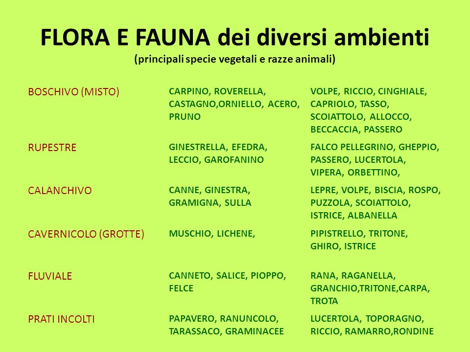 FLORA E FAUNA dei diversi ambienti (principali specie vegetali e razze animali)