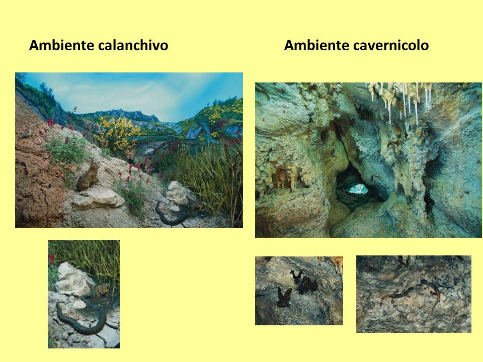 Ambiente calanchivo Ambiente cavernicolo