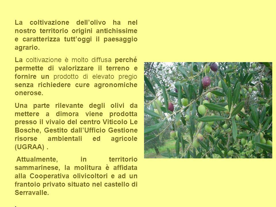 La coltivazione dell'olivo ha nel nostro territorio origini antichissime e caratterizza tutt'oggi il paesaggio agrario.