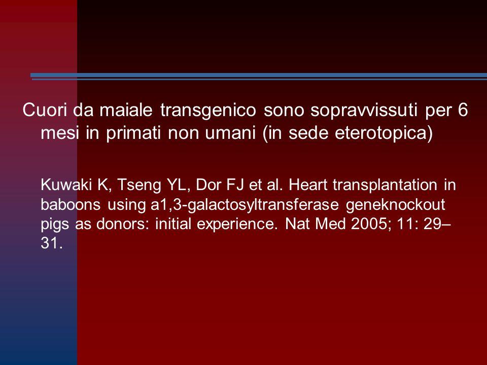 Cuori da maiale transgenico sono sopravvissuti per 6 mesi in primati non umani (in sede eterotopica)