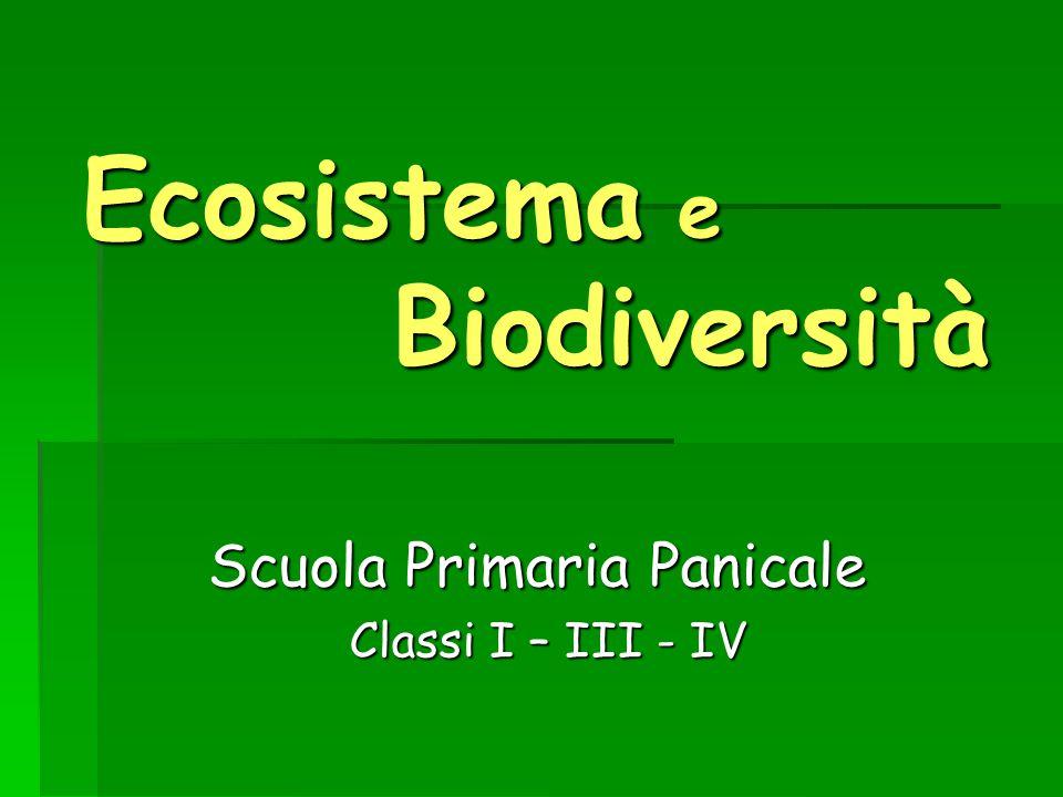 Ecosistema e Biodiversità