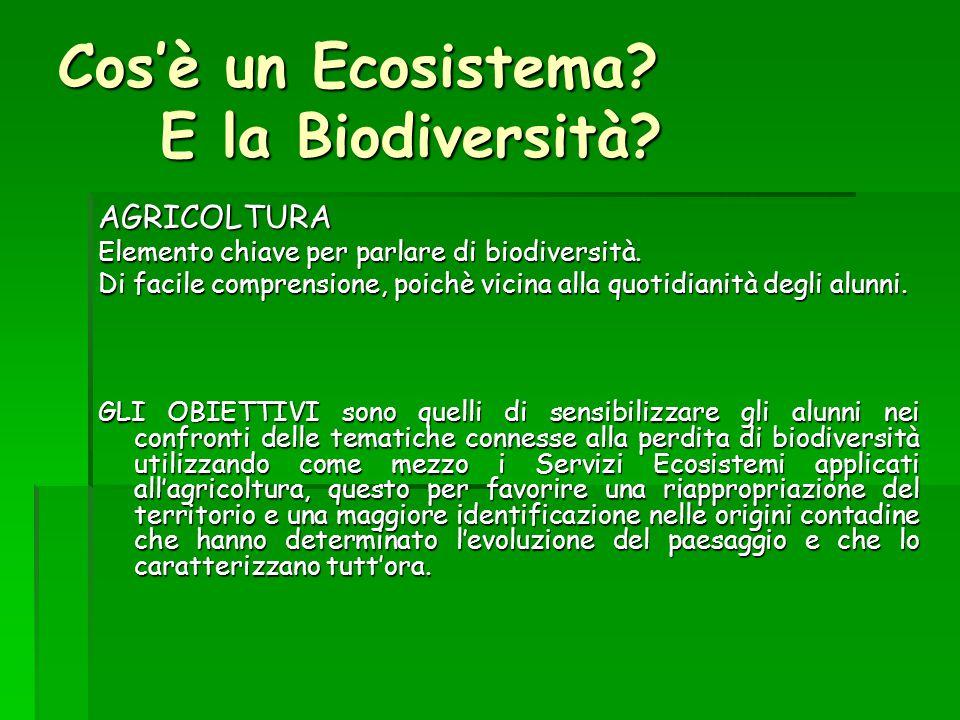 Cos'è un Ecosistema E la Biodiversità
