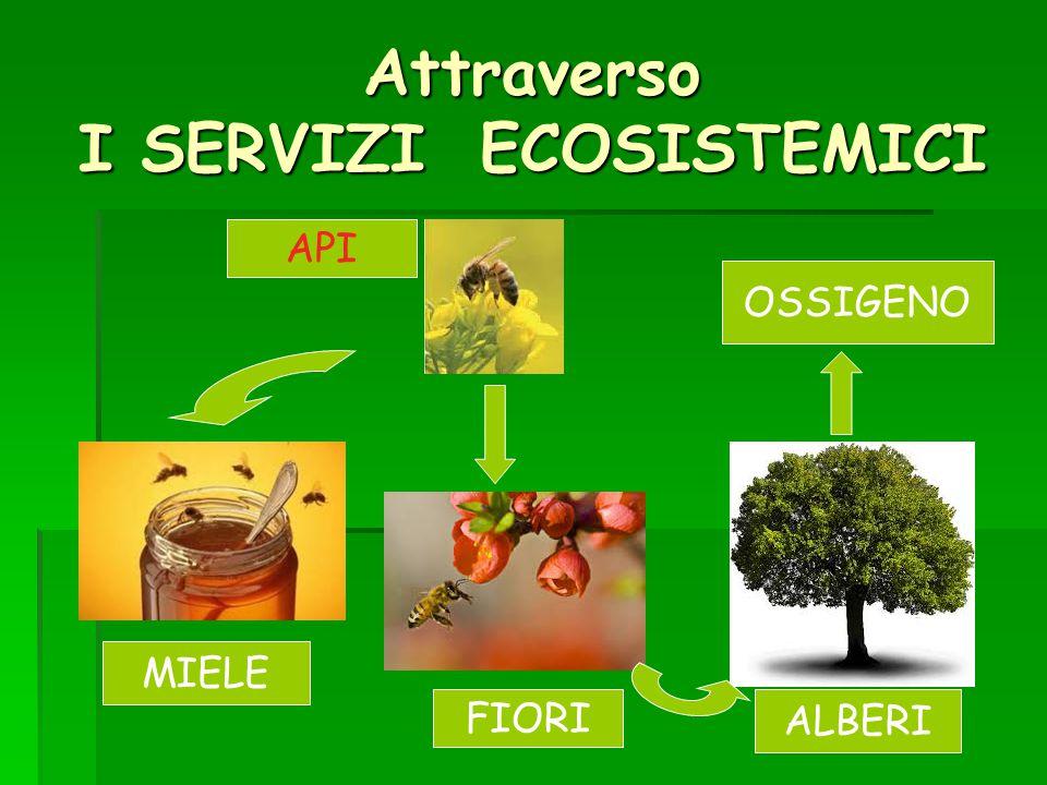 Attraverso I SERVIZI ECOSISTEMICI