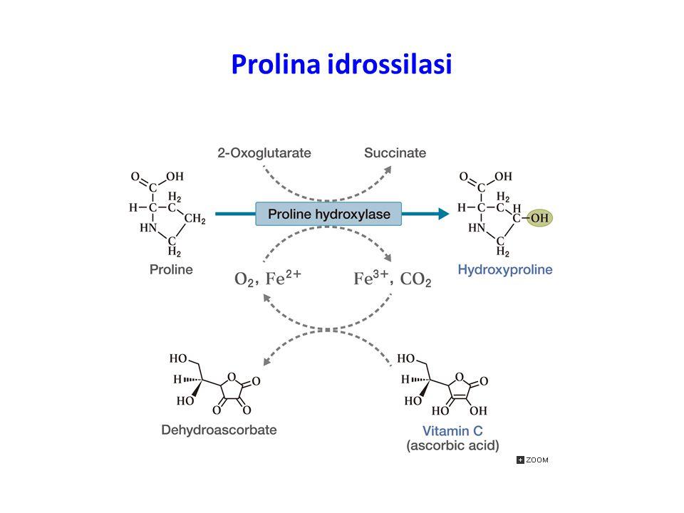 Prolina idrossilasi