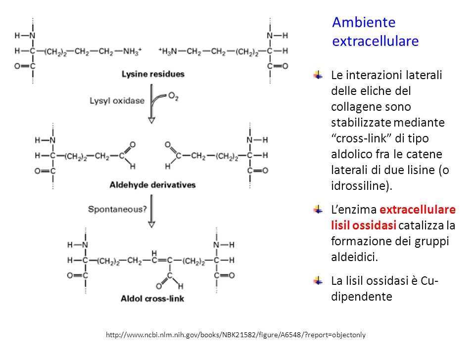 Ambiente extracellulare