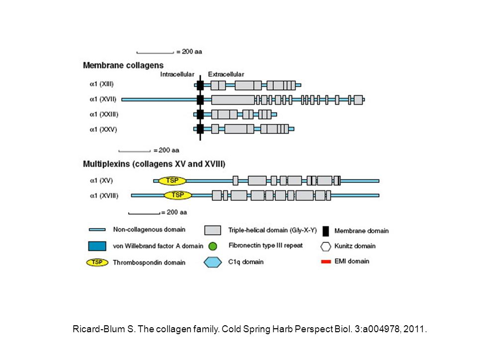 Ricard-Blum S. The collagen family. Cold Spring Harb Perspect Biol