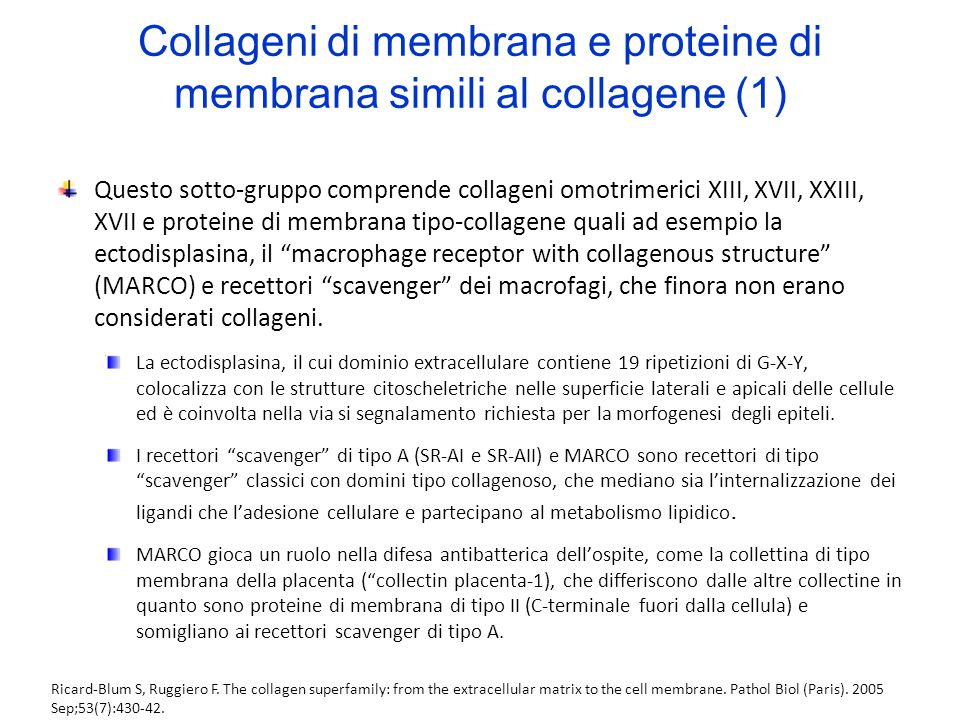 Collageni di membrana e proteine di membrana simili al collagene (1)