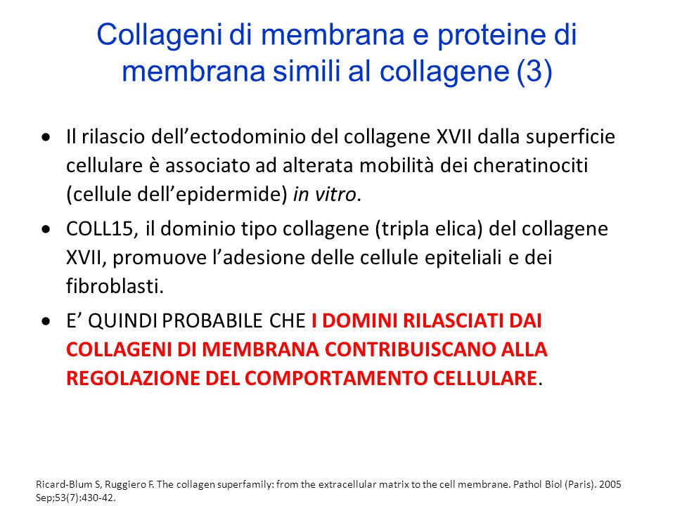 Collageni di membrana e proteine di membrana simili al collagene (3)