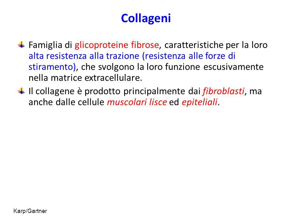 Collageni