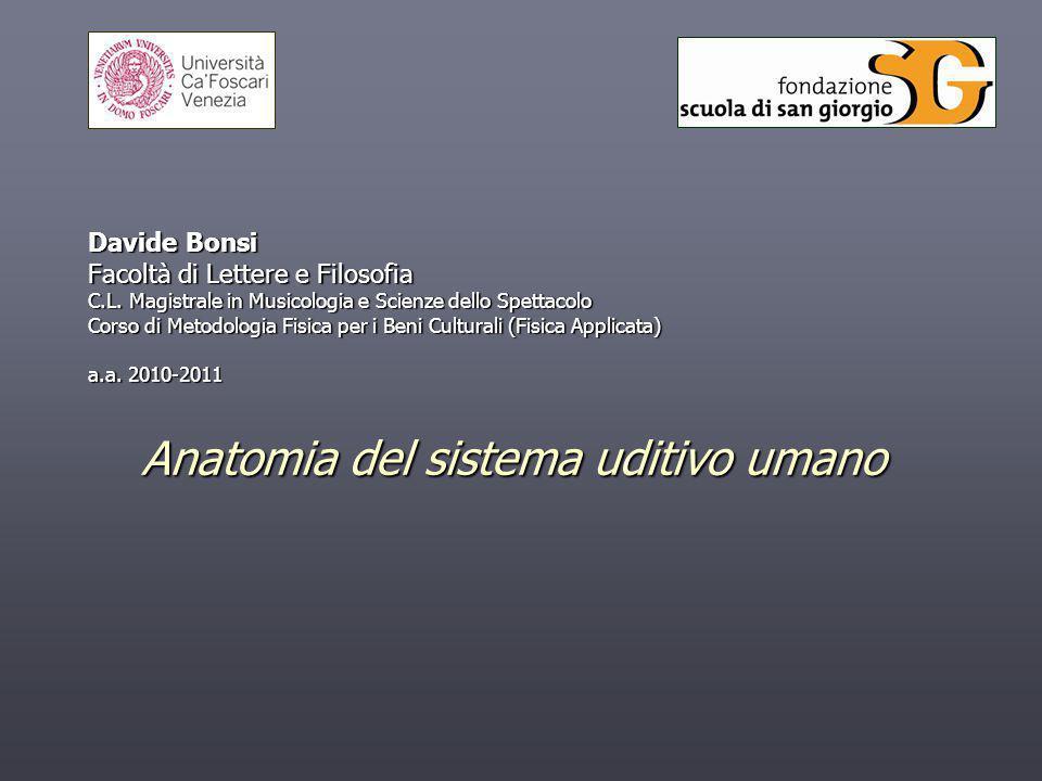 Anatomia del sistema uditivo umano