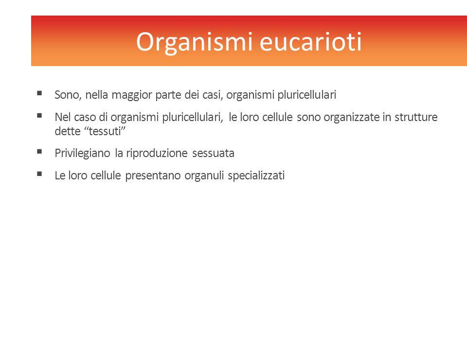 Organismi eucarioti Sono, nella maggior parte dei casi, organismi pluricellulari.