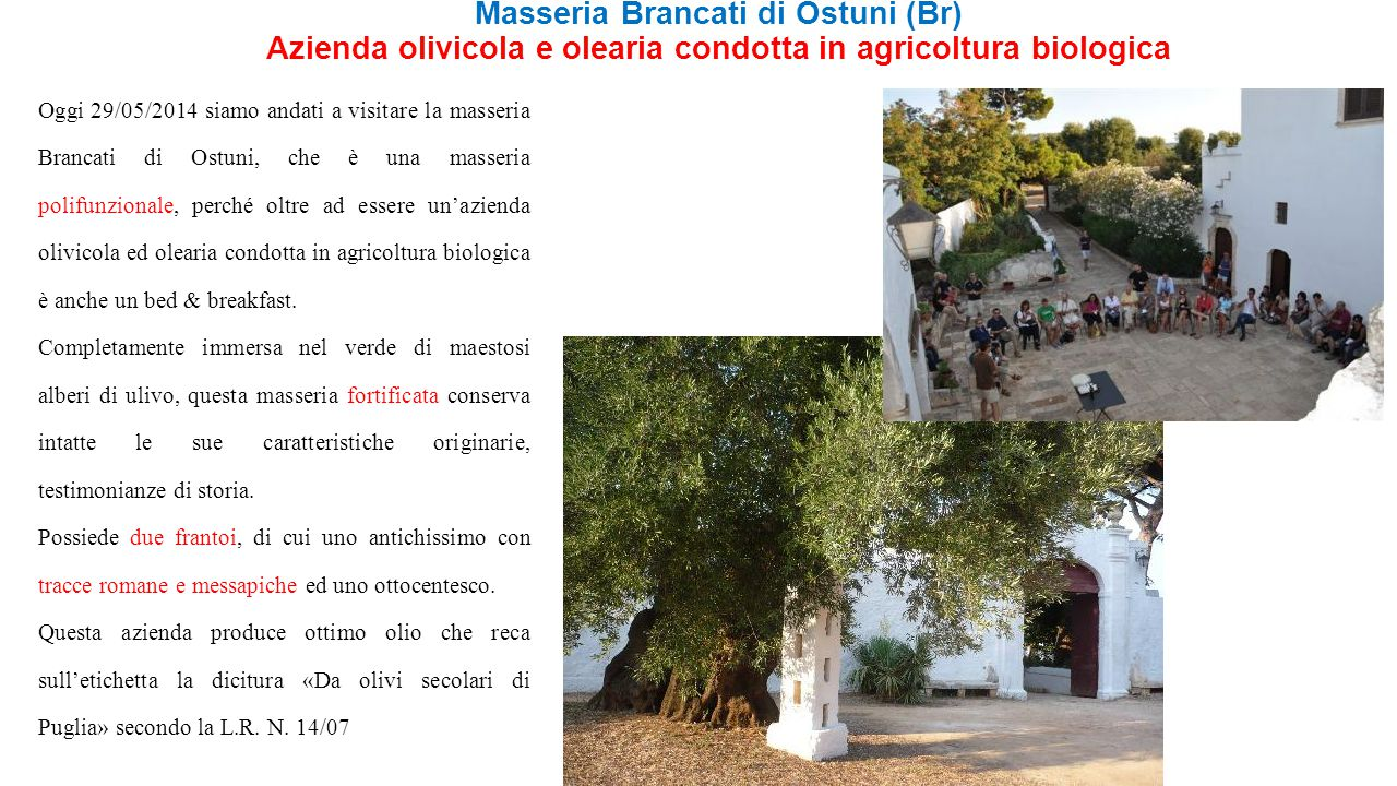 Masseria Brancati di Ostuni (Br) Azienda olivicola e olearia condotta in agricoltura biologica