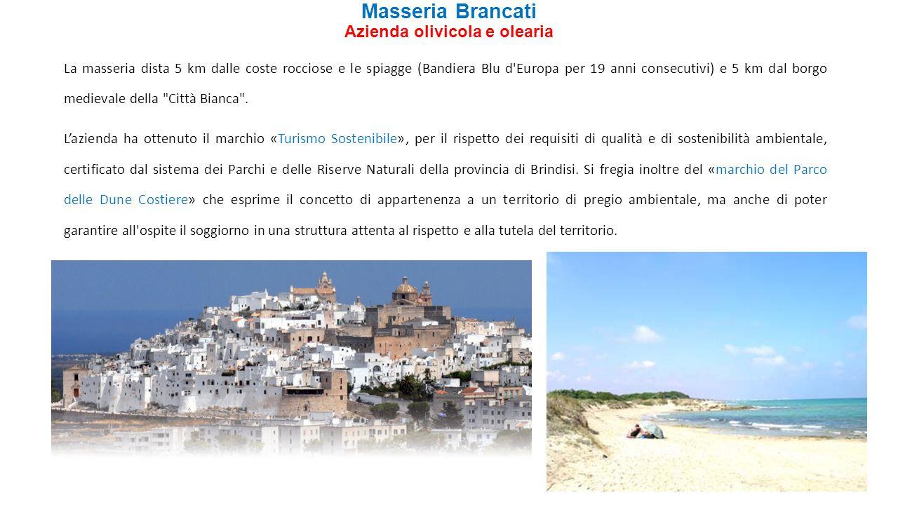 Masseria Brancati Azienda olivicola e olearia