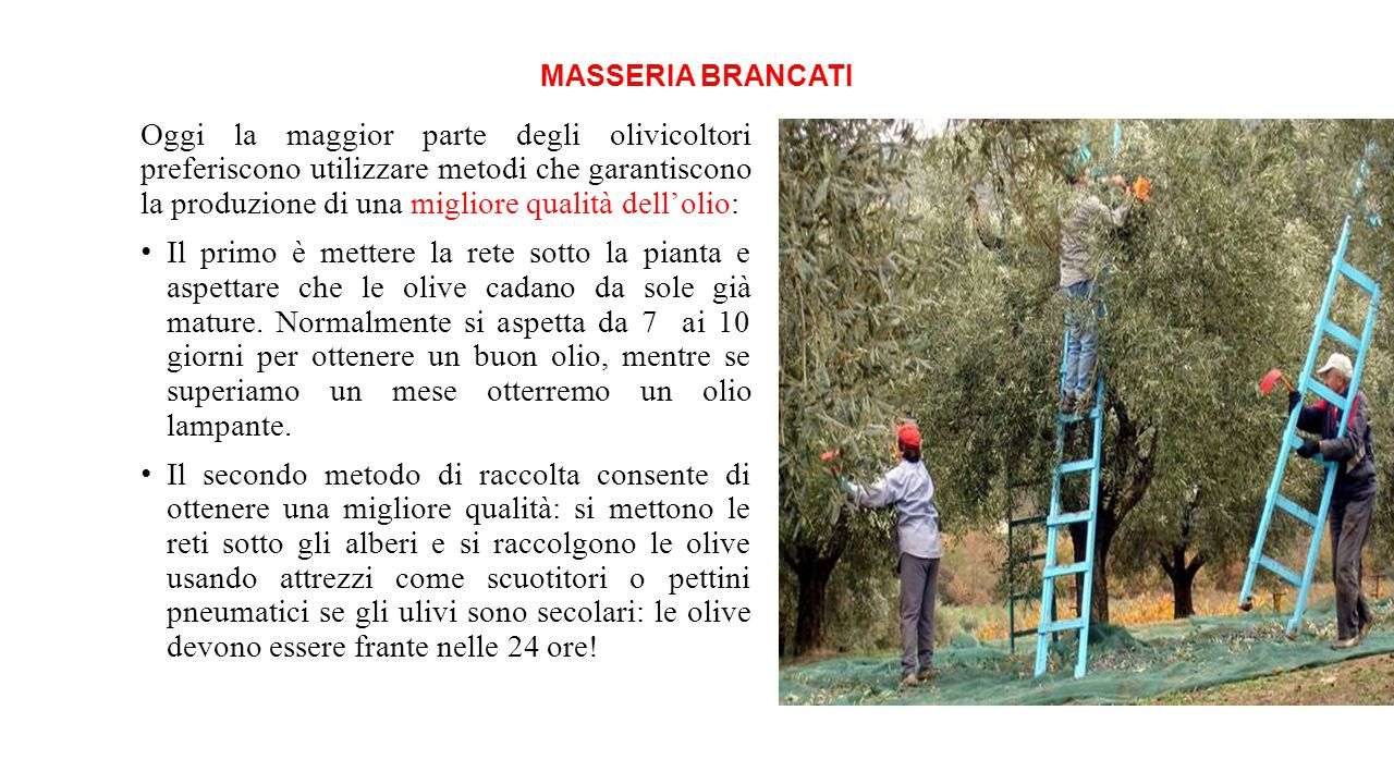 MASSERIA BRANCATI