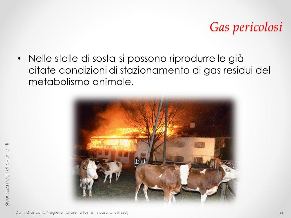 Gas pericolosi Nelle stalle di sosta si possono riprodurre le già citate condizioni di stazionamento di gas residui del metabolismo animale.