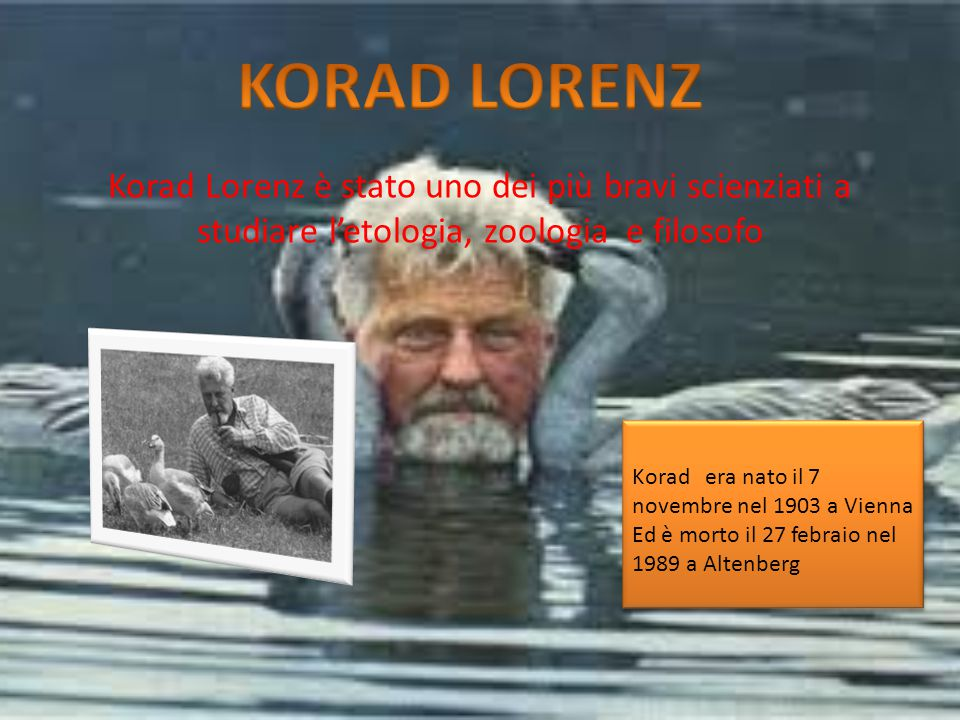 KORAD LORENZ Korad Lorenz è stato uno dei più bravi scienziati a studiare l'etologia, zoologia e filosofo.