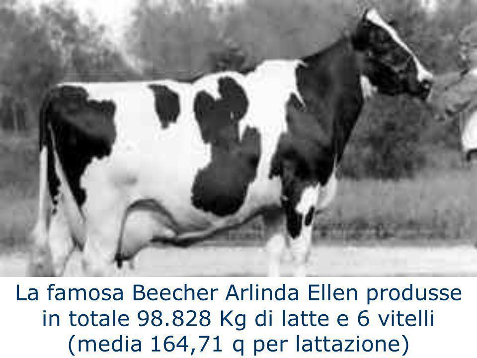 La famosa Beecher Arlinda Ellen produsse in totale 98