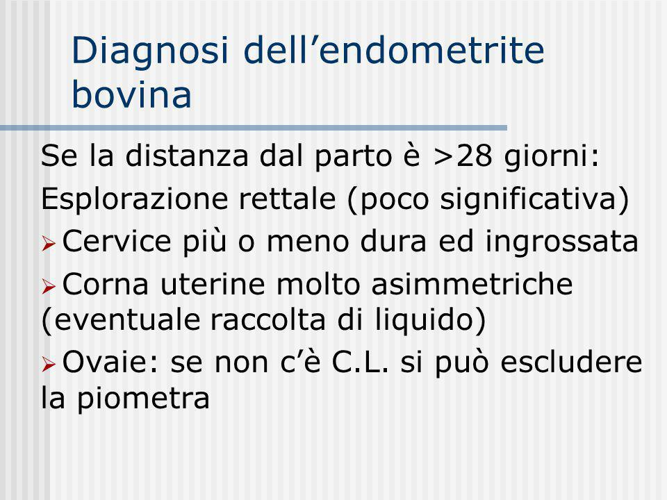 Diagnosi dell'endometrite bovina