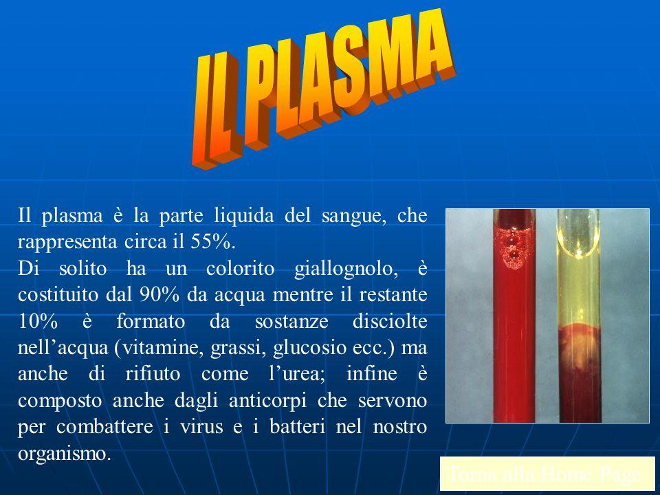 IL PLASMA Il plasma è la parte liquida del sangue, che rappresenta circa il 55%.