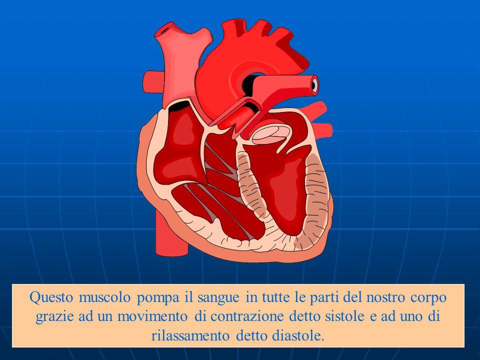 Questo muscolo pompa il sangue in tutte le parti del nostro corpo grazie ad un movimento di contrazione detto sistole e ad uno di rilassamento detto diastole.