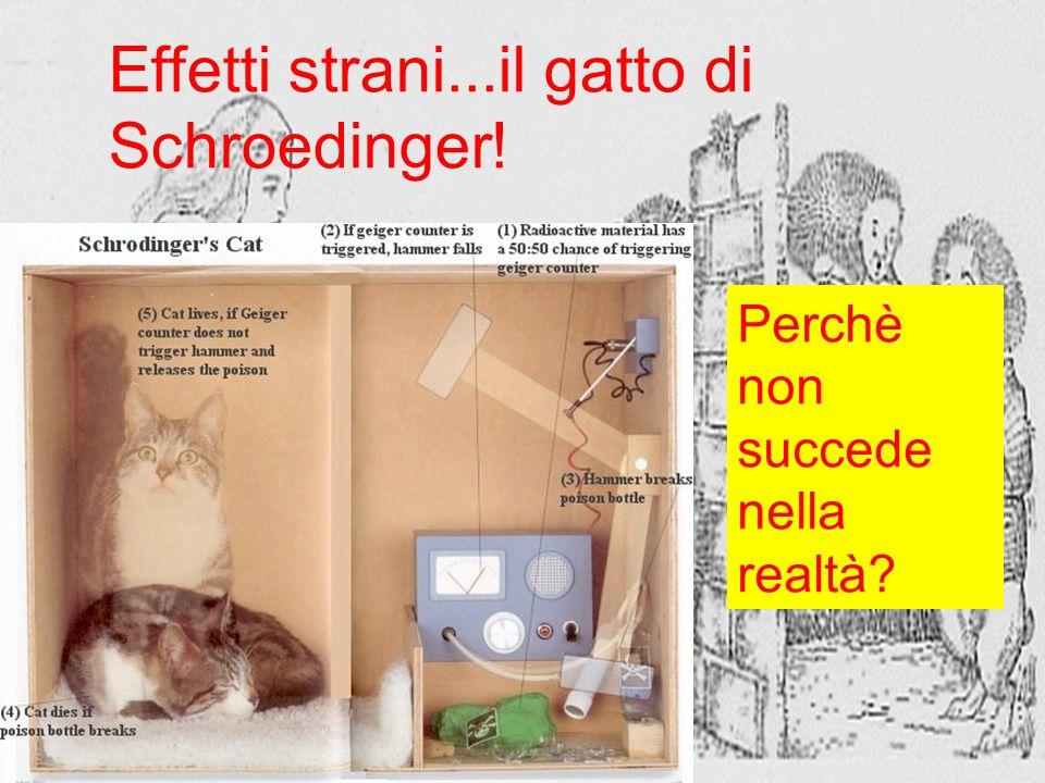 Effetti strani...il gatto di Schroedinger!