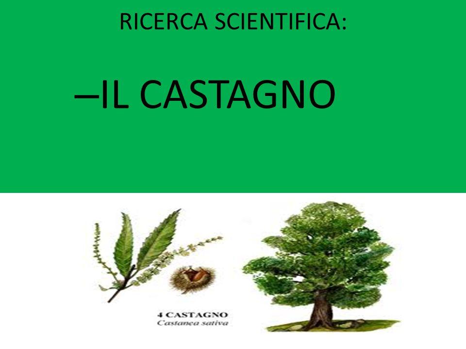 RICERCA SCIENTIFICA: IL CASTAGNO