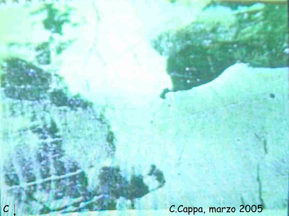C C.Cappa, marzo 2005 Viviana I: … che cosa rappresenta la figura