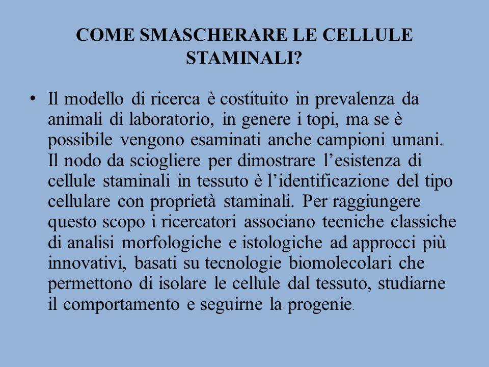 COME SMASCHERARE LE CELLULE STAMINALI