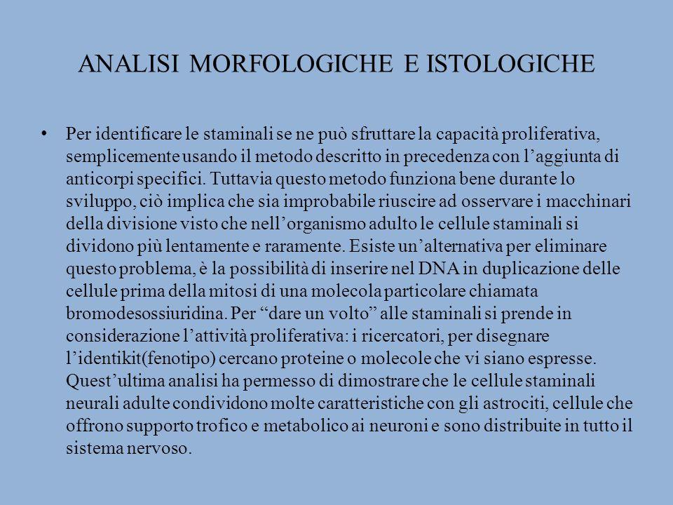 ANALISI MORFOLOGICHE E ISTOLOGICHE
