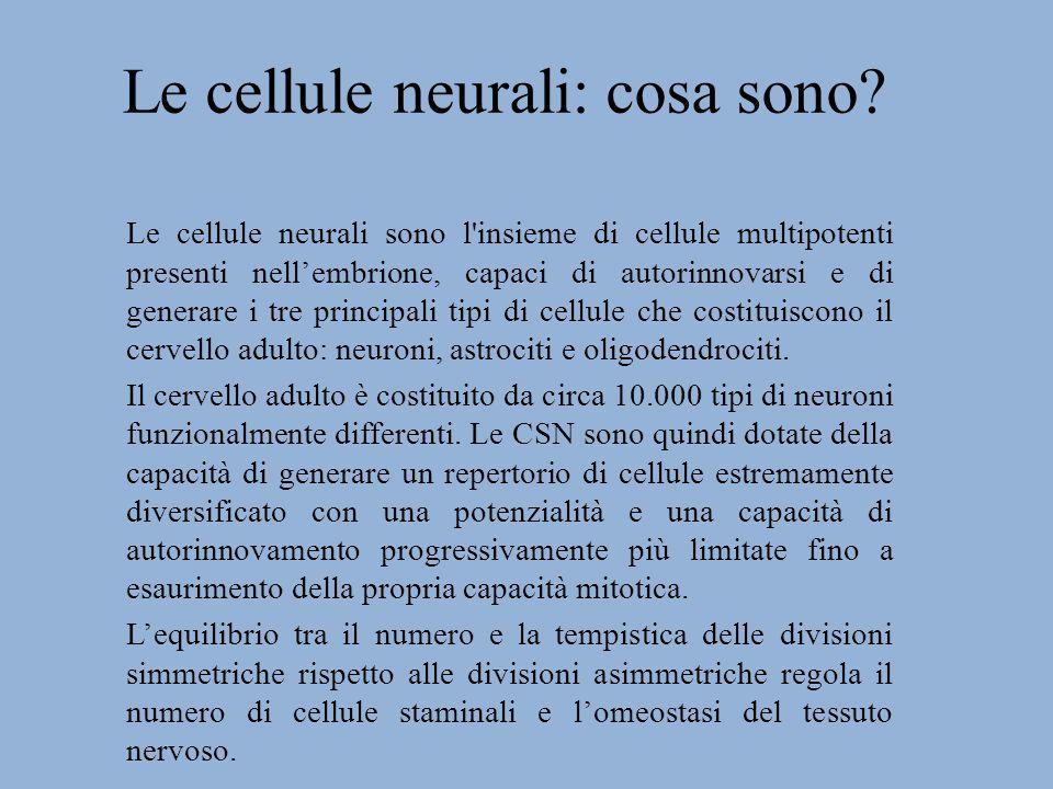 Le cellule neurali: cosa sono