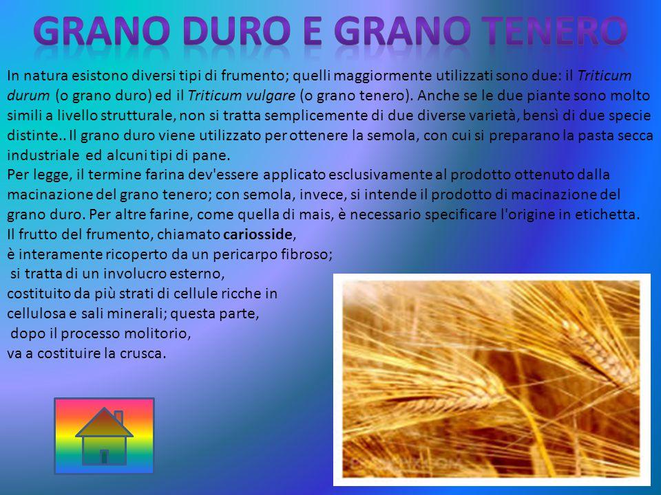 GRANO DURO E GRANO TENERO