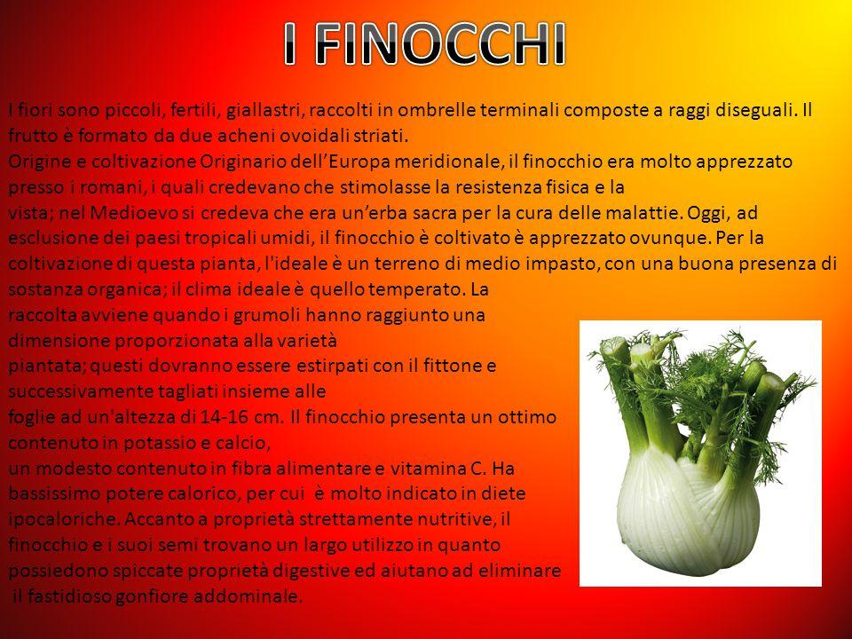 I FINOCCHI