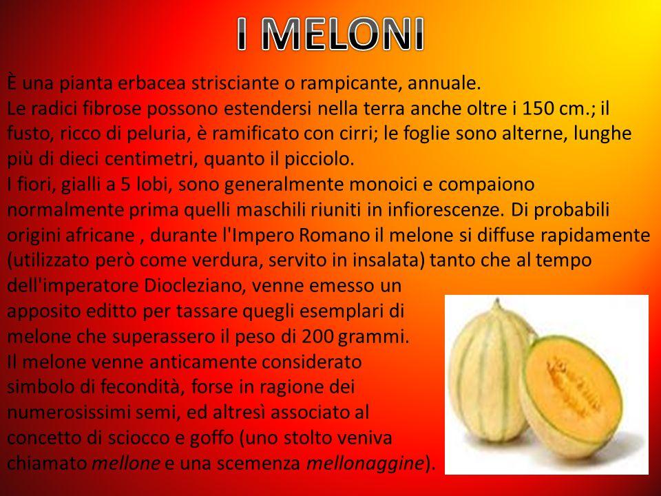 I MELONI È una pianta erbacea strisciante o rampicante, annuale.