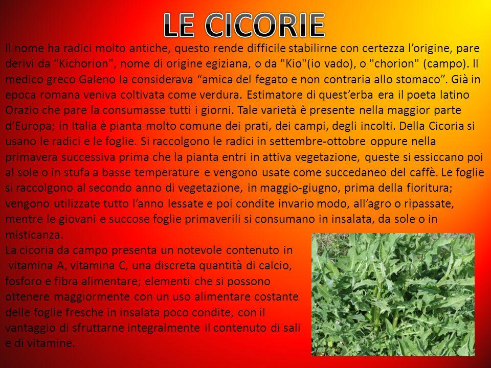 LE CICORIE