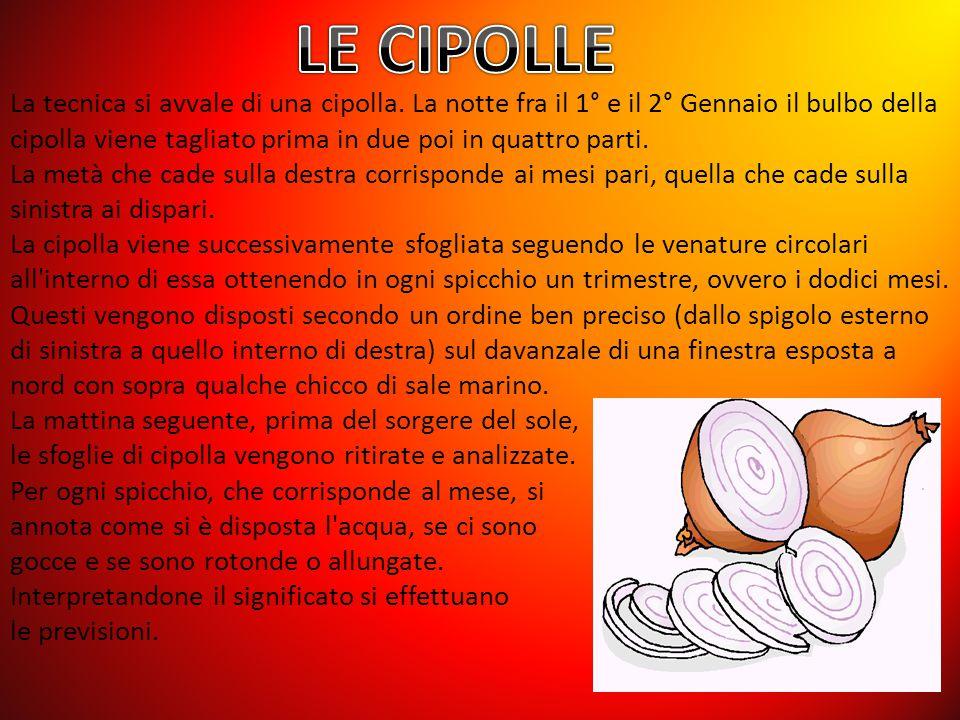 LE CIPOLLE