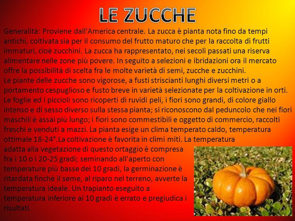 LE ZUCCHE