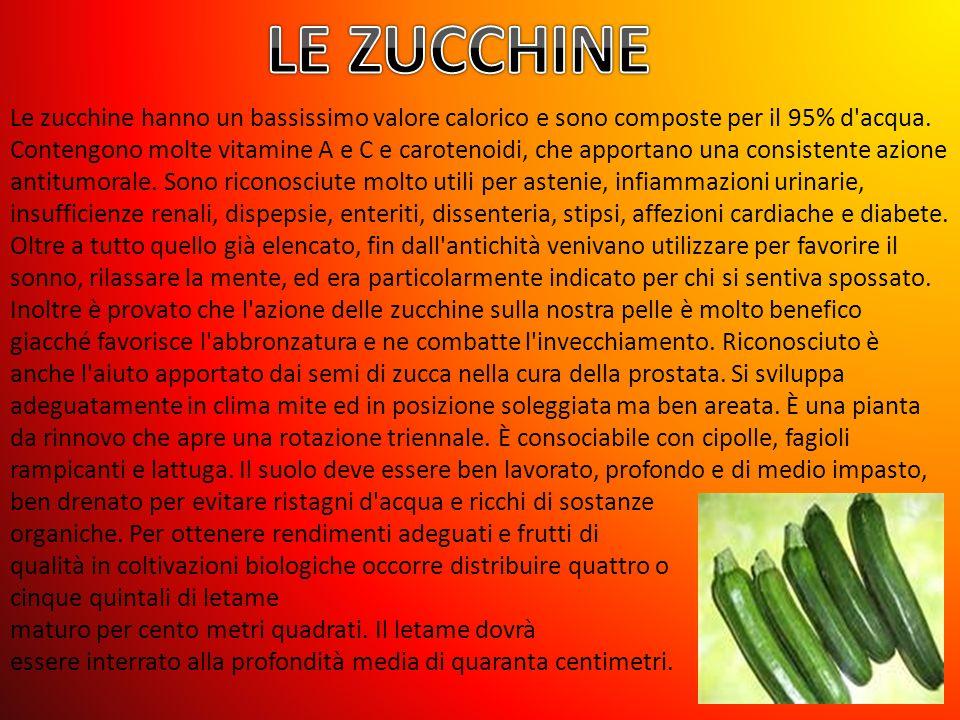 LE ZUCCHINE