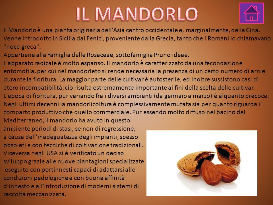 IL MANDORLO