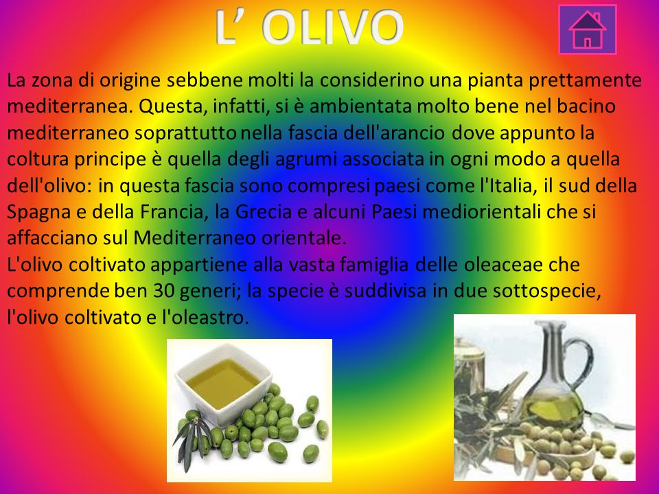 L' OLIVO