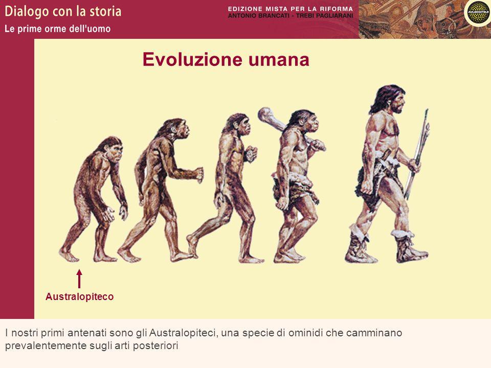 Evoluzione umana Australopiteco.