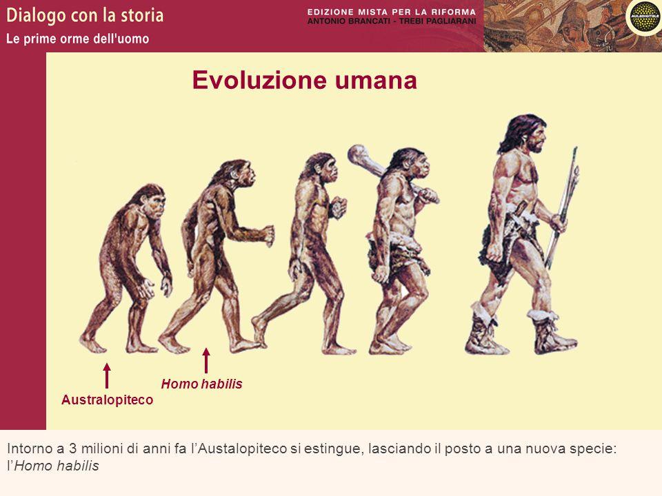 Evoluzione umana Homo habilis. Australopiteco.