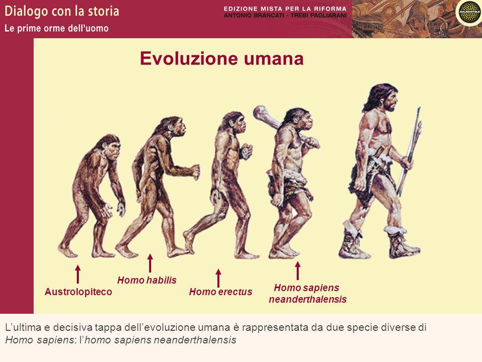 Evoluzione umana Homo habilis. Homo sapiens. neanderthalensis. Austrolopiteco. Homo erectus.