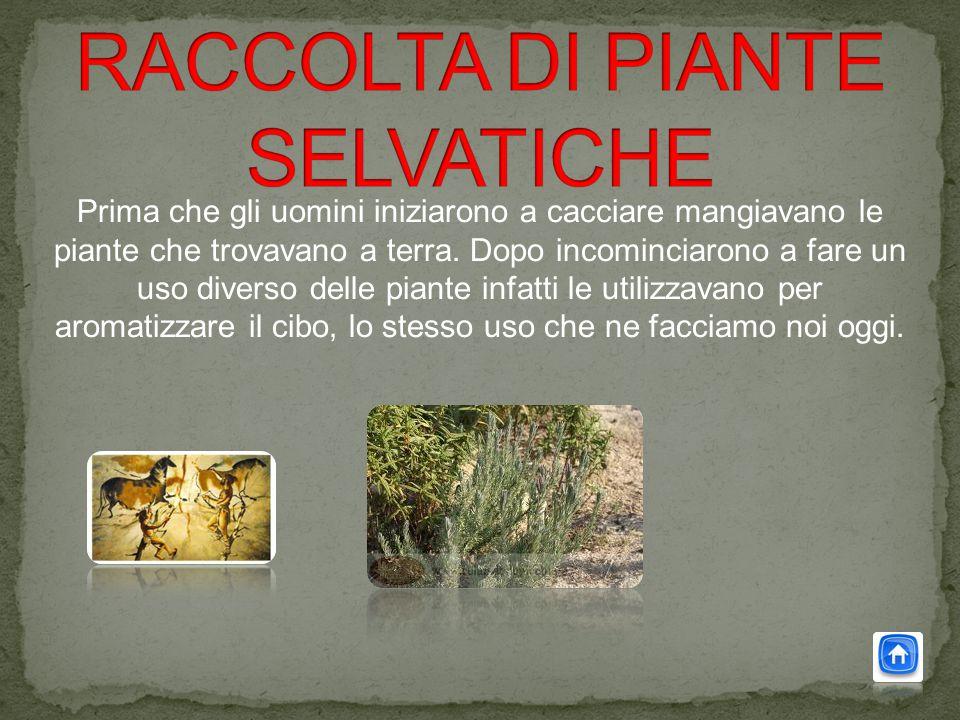 RACCOLTA DI PIANTE SELVATICHE